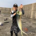6月23日 シイラ 太刀魚 ノマセでメジロ・シイラ