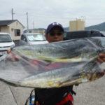 6月26日 シイラ 太刀魚
