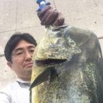 7月16日 シイラ 太刀魚 ソーダ鰹 サワラ