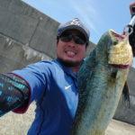 7月29日 シイラ 太刀魚 ツバス シオ ソーダ鰹 カマス