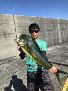 8月11日 シイラ 太刀魚 サワラ ソーダ鰹