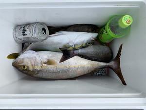 9月27日 シオ ツバス イサギ イシガキ シイラ 太刀魚 アオリイカ