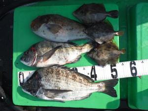 4月9日 チヌ イガミ カワハギ 真鯛