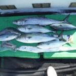 10月27日 メジロ ハマチ 太刀魚 サワラ アオリイカ