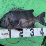10月10日 メジロ ペンペン 太刀魚 石鯛